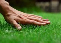 Quality 100% Weed Free Roll-On Turf 